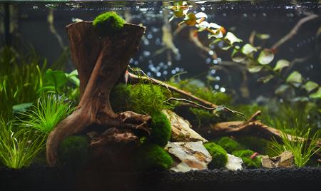 aquascaping: Nano aquarium Stock Photo