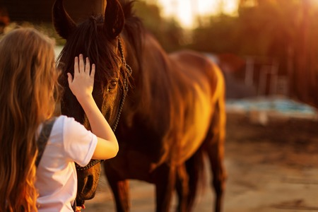 wild Mustang and the girl in green forest. the concept of love and trust between human and animal.