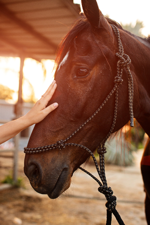 womans hand touches the head of a horse.