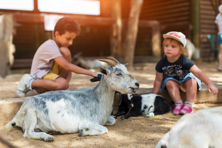 little boy and girl feeding goat at farm Reklamní fotografie