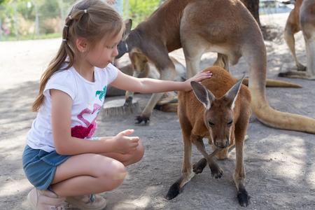 Girl feeds a kangaroo at the Australian Zoo Gan Guru in Kibbutz Nir David, in Israel