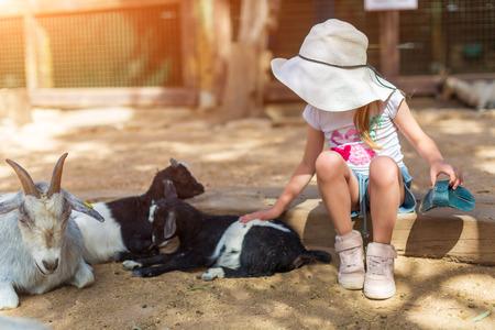 little girl feeds a goat at a childrens petting zoo Reklamní fotografie