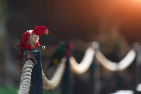 Australian red parrot in zoo of Israel