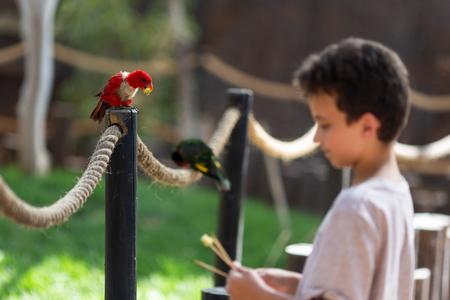 Undefined young boy feeding parrot at Israeli zoo Reklamní fotografie