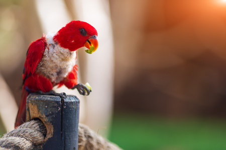 Red Parrot in tropical forests. Australian parrot in zoo of Israel
