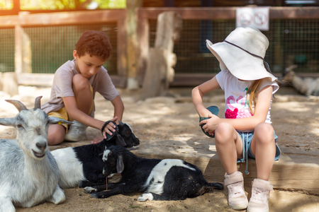 Little cute boy with sister hugging goat on the goat cheese farm Foto de archivo
