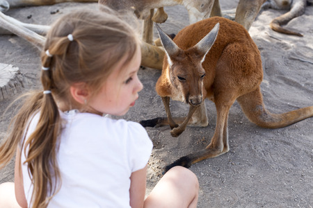 cute little girl and a kangaroo at an australian zoo in israel