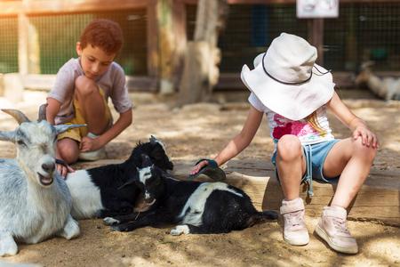 little boy and girl feeding goat at farm Foto de archivo