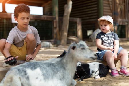 two kids boy and girl taking care of domestic animals on farm