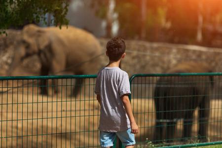 little boy looking at elephants in zoo, child on safari trip