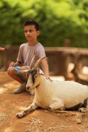 boy strokes a white goat in a zoo Reklamní fotografie