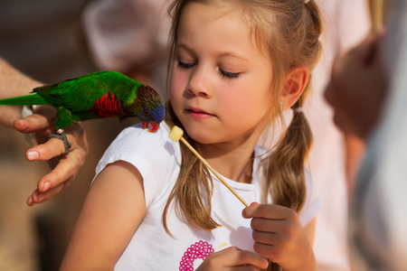 small child, a girl of 5-6 years old feeds a parrot, Sensitivity to nature