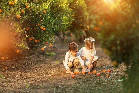 children picking fruit in an orange grove