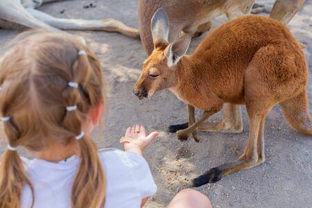 little girl caring for an Australian kangaroo feeding Australian animals.