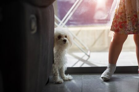 little girl with a dog at home near the window Reklamní fotografie
