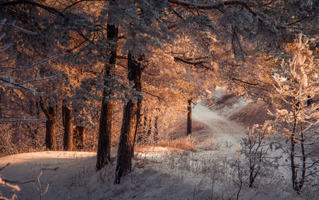 saturated color: wonderful winter landscape in the evening sun. saturated color. beauty world