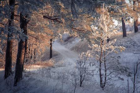 a wonderful world: wonderful winter landscape in the morning sun. beauty world