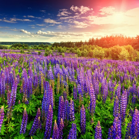 Fantastic sunny day flowering hills in the warm sunlight in the summer. Stock Photo