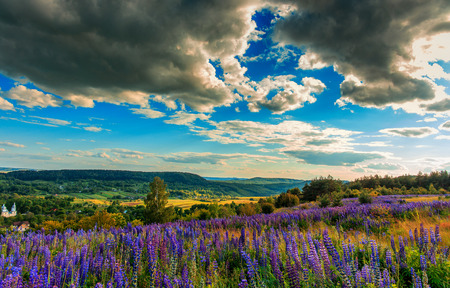 wonderful landscape. Majestic mountain landscape with lupine blooming field on a sunset with colorful overcast sky. picturesque scene. breathtaking scenery. wonderful landscape. creative images. Stock Photo