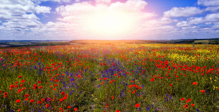path to the sun through colorful flowers in the field in sunny day. wonderful summer landscape. nature background Stock Photo