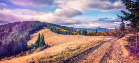 road in the mountains. Wonderful autumn mountain landscape. majestic, overcast clouds in sunlight. spruce forest on mountain hillside in sunny day. effect