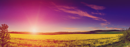 fantastic landscape, majestic sunset. Magnificent views of the endless canola field glowing by sunlight. . serie creative images. color in nature. Stock Photo