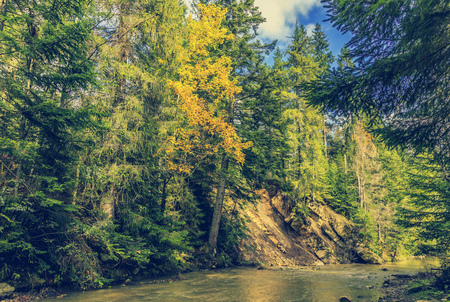 autumn amazing landscape. colorful trees over the mountain river in the forest gloving in the sinlight. retro style. Stock Photo