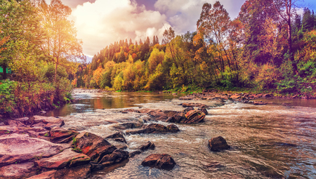 autumn amazing landscape. colorful trees over the mountain river in the forest gloving in the sinlight. retro vintage style.