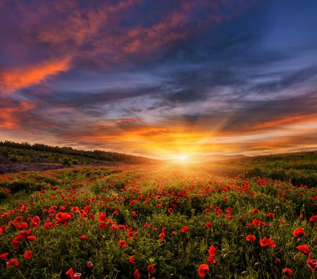 majestic landscape, colorful sky over the poppy field, af wonderful sunset. soft selective focus. creative image.