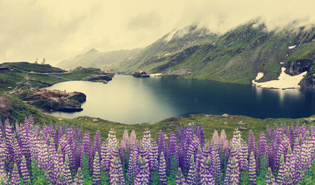 nature landscape. Balea Lake, Fagaras Mountains, Romania . with overcast clouds in the sky. and blue flower on foregraund. Transfagarasan road in the Carpathian Mountains, Romania, Eastern Europe.