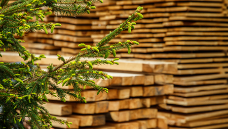 young branches of living trees and Stack of new wooden studs at the lumber yard. Wood timber construction material