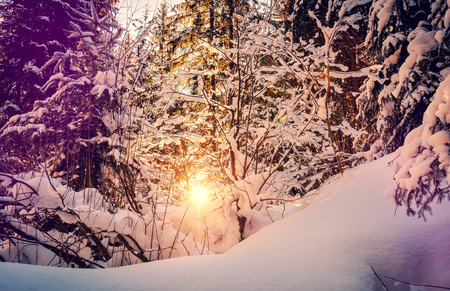 Fantastic winter forest landscape. Icy snowy fir trees glowing in sunlight. winter holiday concept. travel happy day. wonderland in winter. background in postcard. creative  image.