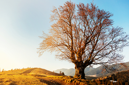 Wonderful Sunny landscape. with old tree under sunlight on highland.