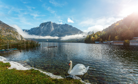 Amazing Scene on the Altaussee Lake. white swan in turquoise water. High mountains lake. Beautiful landscape of alps, Wonderful Picturesque scene. Famous alpine place of the world. Foggy Sunrise