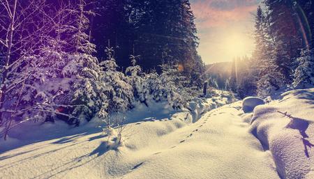Majestic winter landscape. frosty pine tree under sunlight at sunset. christmas holiday concept, unusual wonderful landscape. fantastic wintry background. retro style