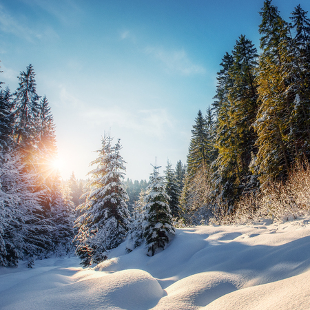 Wonderful Winter Landscape with Perfect Sky at Sunny Day