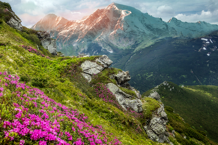 Splendid Sunny Landscape in Mountains. Fairytale Valley on Alpine highlands, with fresh Flowers Rhododendron. Amazing Natural Background. Wonderful Spring Scenery with Rock Peak under Sunlit. Imagens