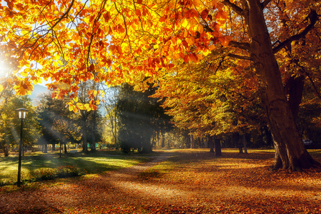 Autumn Landscape. Beautiful romantic alley in a park with colorful trees, Scenic image of fairy-tale woodland in sunlit. Wondrful Natural Background. Unbeatable colors in the nature. Postcard Banco de Imagens