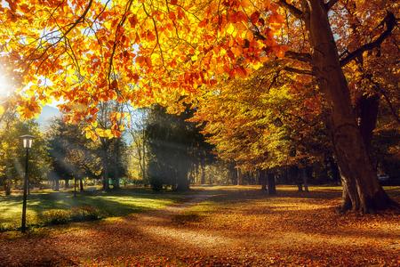 Herfst landschap. Mooie romantische steeg in een park met kleurrijke bomen, Schilderachtig beeld van sprookjesbos in zonovergoten. Prachtige natuurlijke achtergrond. Onovertroffen kleuren in de natuur. Ansichtkaart Stockfoto