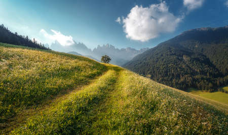 Beautiful view of idyllic alpine mountain scenery with fresh green grass on meadows and majestic mountain peaks on a beautiful sunny day with blue sky in springtime. Amazing Nature Scenery. Dolomites