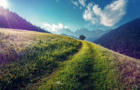 Scenic image of Dolomites mountains meadow. Sunset in the mountain valley. Beautiful natural landscape in the summer time. Creative image