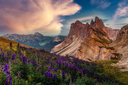 Amazing nature landscape. fantastic view of Majestic Dolomites mountains peaks with colorful sky and pink flovers on foreground. Odles group shot from Seceda, Santa Cristina Valgardena, Italy
