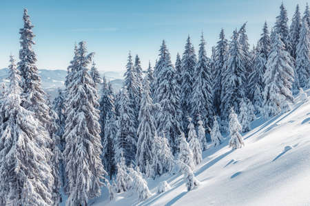 Wonderful Winter Landscape. Awesome Alpine Highlands in Sunny Day. Christmas holyday concept. Winter mountain forest. Snowy mountains and perfect blue sky. Amazing Nature background. postcard.
