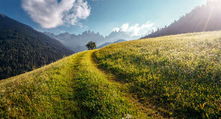 Idyllic landscape in the Alps with fresh green meadows. Scenic images of Dolomites Alps. Fantastic Sunny Morning over the mountains valley. Amazing alpine nature. Unsurpassed sunrise in the mountains 版權商用圖片
