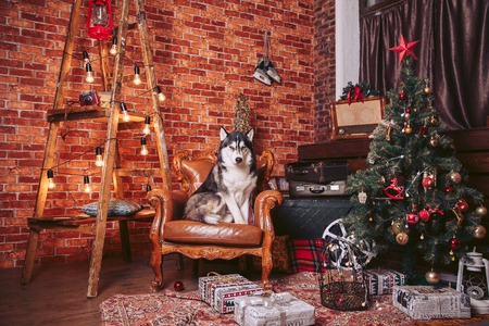 Room decorated with decorations decorated for Christmas, with a dog on the chair