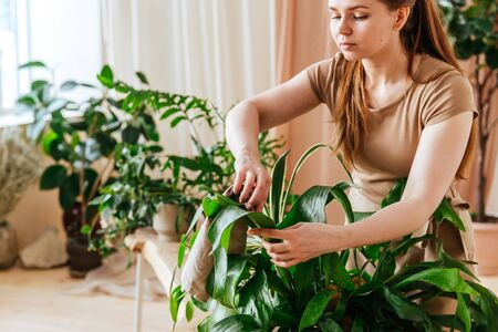 Pretty young woman washes the leaves of house plants at home greenhouse