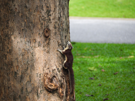The squirrel holding on a tree that looking up.
