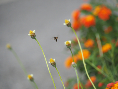 Bee flying around the grass flower with beautiful background.