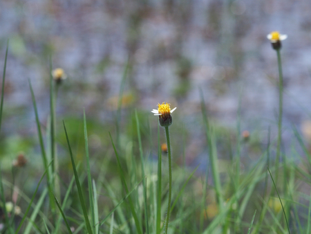 focus middle grass flower and blur background. Stock Photo