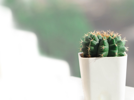 focus lovely little cactus on white background.